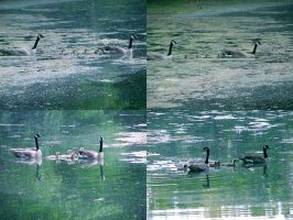 All-American Avian Family by LAPoetry-n-Photo