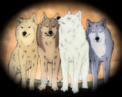 wolf's rain pack by TOBOEANDHIGE