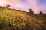 Color Explosion by PeterJCoskun