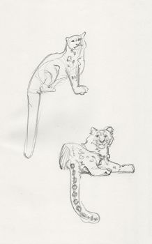 Snow Leopard Quick Sketches by MaryHighstreet