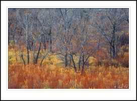 Winter Color by GuyTal