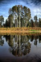 Tree Mirror by Temporalvisions