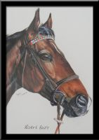 Horse Portraits by ShannonMey