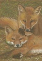 Playful Foxes by Kaelir-of-lorien