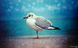 seagull by PYFF