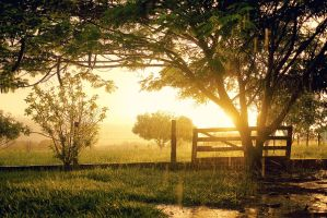 the Afternoon Rain by IsacGoulart