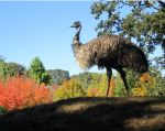 Eddie the emu with fall colors by Reptangle