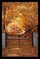 Follow The Yellow Leaf Road by SassyPants61762