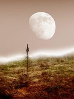Desert Stock 1 by SimplyBackgrounds