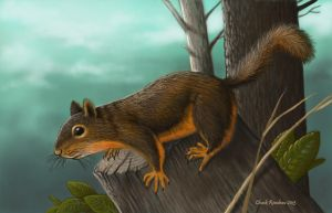 Douglas Squirrel by ChuckRondeau