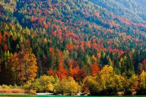 Colours of autumn III by luka567