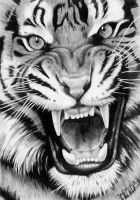 Roaring Tiger - Graphite Drawing by JasminaSusak
