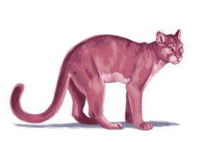 Pink Panther - Realistic by moth-eatn