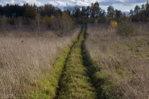 The Path by rici66