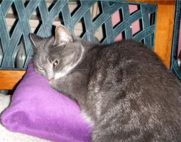 Smokey And Her Purple Pillow by LindaLee