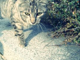 Stray cat by Sternensucher