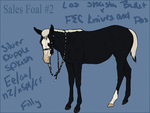 Lineage Foal 2 - Shasta x Andy FOR SALE by FallbrookeEC