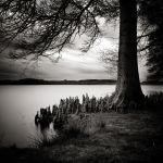 The people of the trees II by etchepare