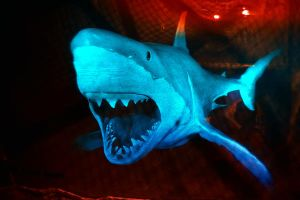 'Jaws' by Shooter1970
