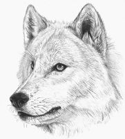 Wolf by isabelle535