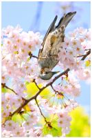 Brown-eared Bulbul and Flowers by simzcom