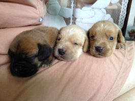 Puppies !!!!!!! by ET95