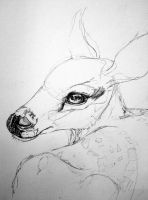 Fawn drawing WIP 1 by lamelobo