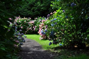 A Magical Path by Forestina-Fotos
