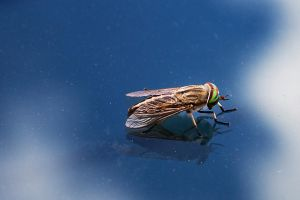 The Horsefly by lifeinedit