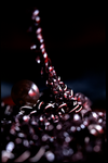 Blood Chains by proboarder