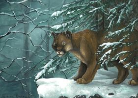 Cougar on Snowy Ledge by Nylak