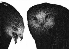 Red kites (ballpoint pen) by PurpleKettu
