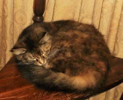JackieAmelia~fluffy, curled-up and adorable by MystMoonstruck