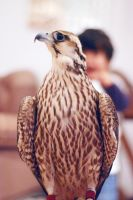 behind the falcon lil boy by reeed