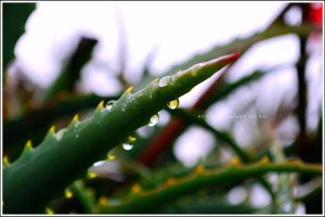 A Drop of Water by Ana-D