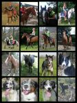 My Animals 2014 by StarCrossedPsycho