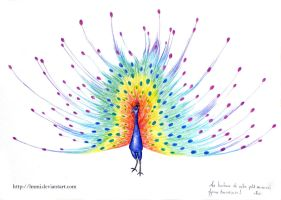 Rainbow Peacock by lmmi