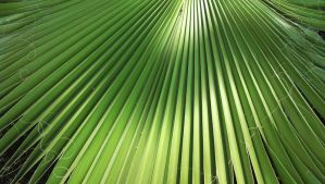 Palm Leaf 2 by CliffEngland