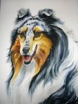 Merle Collie Tutorial 6 by HouseofChabrier