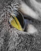 Cats Eye View by sherln