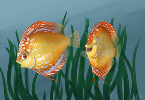 Discus Fish by danke-kitten