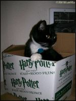 Harry Potter Guard cat. by FallMoonlitRose
