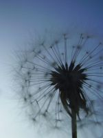 dandelion sky. by smokedval-stock