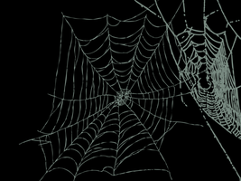 cobweb by dreamsofmirrorss