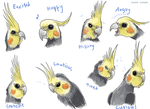 Cockatiel Expressions by Kanis-Major