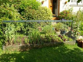 Raised beds by piglet365