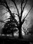 Tree of death by Mheely