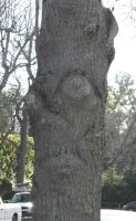 The Trees Have Eyes by Leppardra