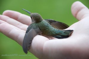 Hummingbird Up Close by pantherwitch4982
