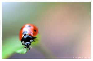 Ladybird by sublime69